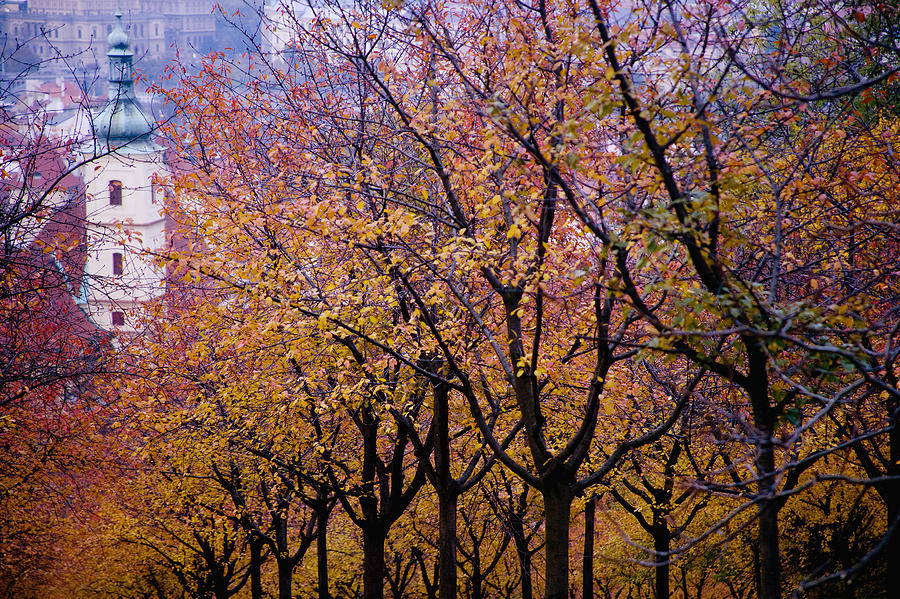 Beauty In Nature Photograph - View Of Prague From Mala Strana Park by Axiom Photographic