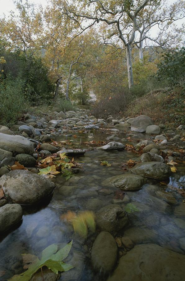 North America Photograph - View Of The Arroyo Hondo Creek by Rich Reid