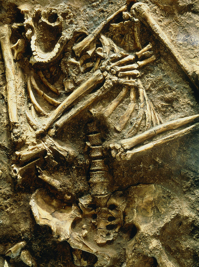 Neanderthal Photograph - View Of The Skeleton Of A Neanderthal by Volker Stegernordstar - 4 Million Years Of Man
