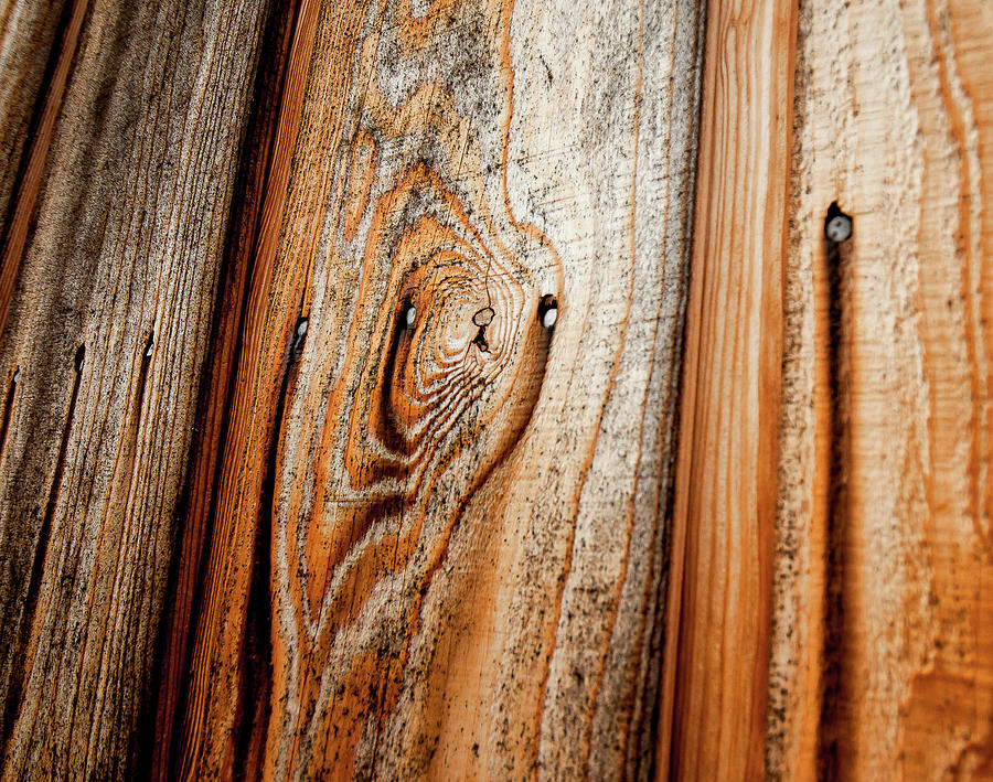 Horizontal Photograph - View Of Wooden  Ply by Veronique Regimbal photographie