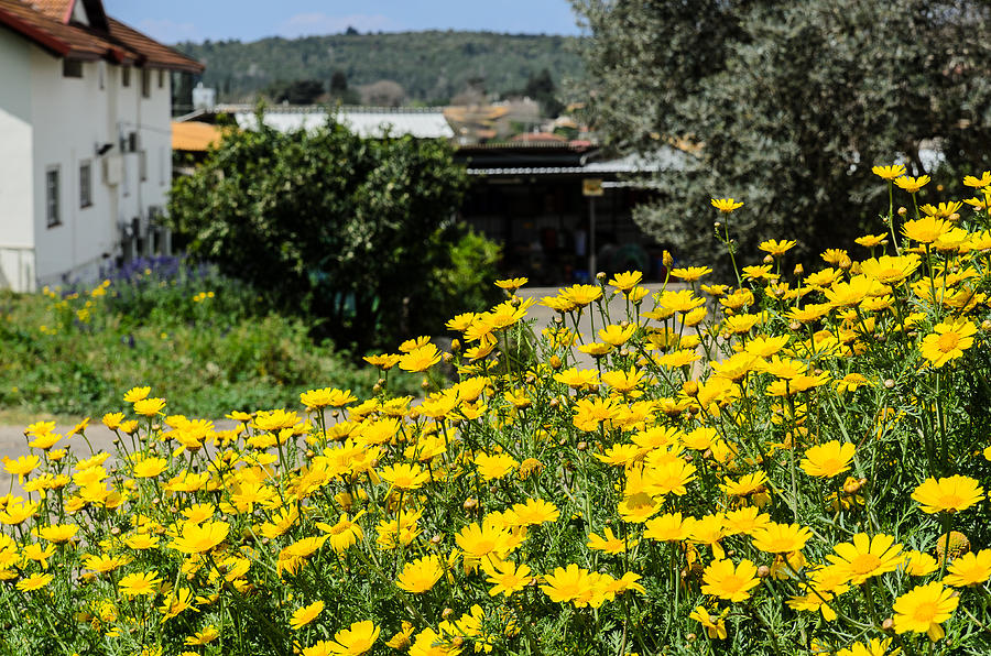 Background Photograph - Village House and wildflowers by Michael Goyberg