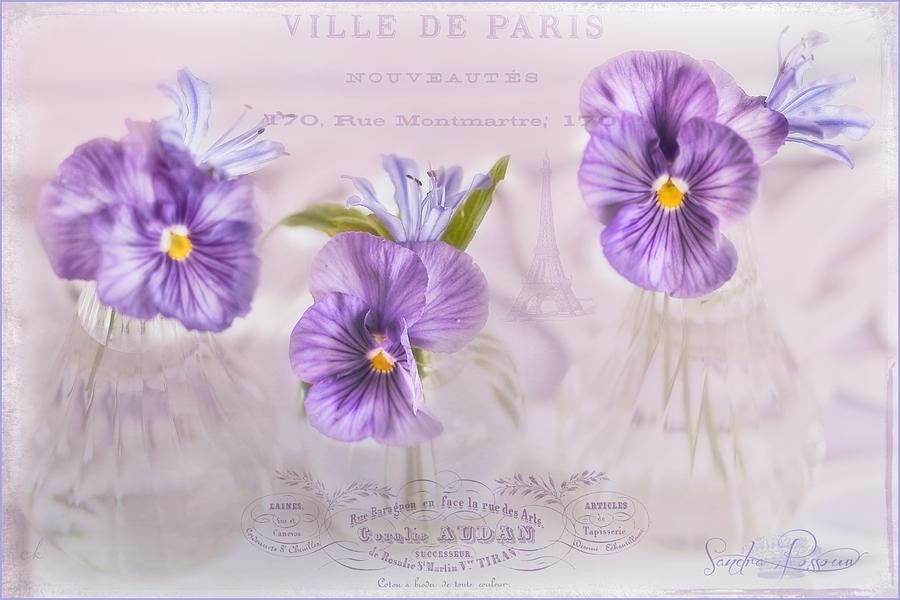 Flowers Photograph - Ville De Paris by Sandra Rossouw