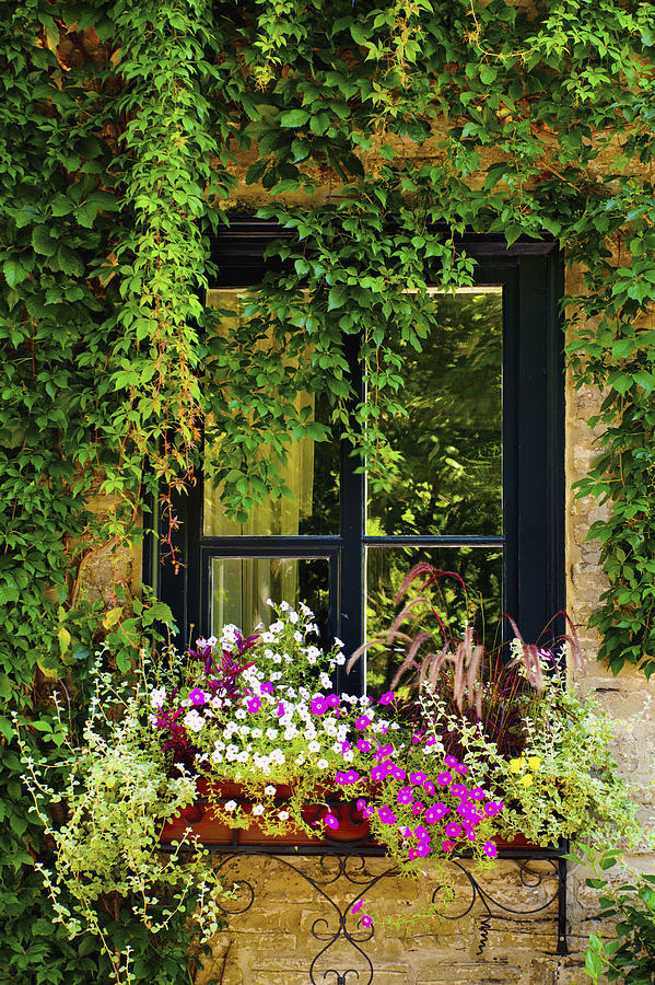 Window Photograph - Vines Growing On A Wall And Flowers by David Chapman