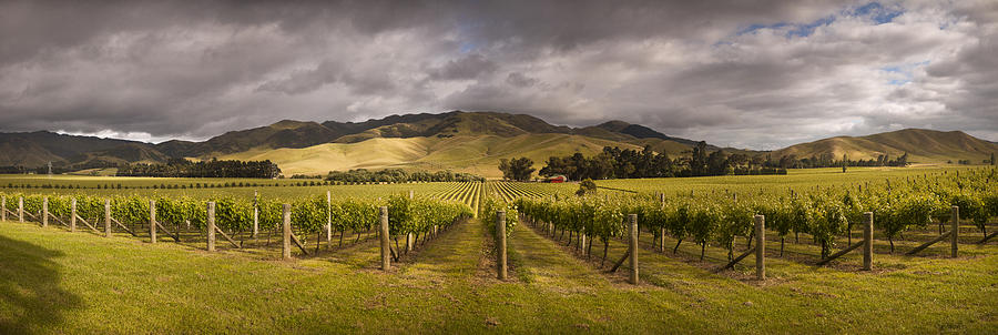 Vineyard  Awatere Valley In Marlborough Photograph by Colin Monteath
