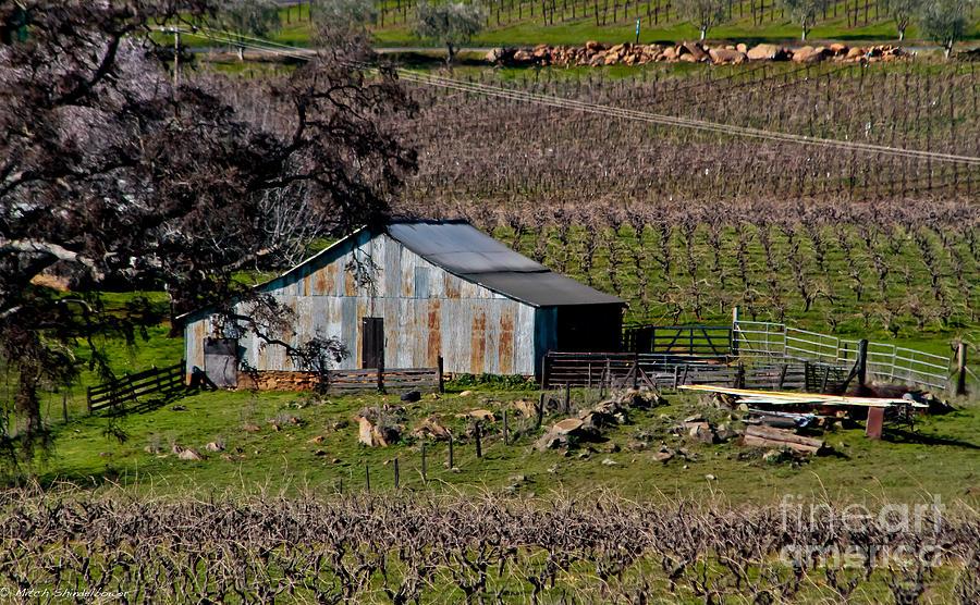 Vineyard Barn Photograph