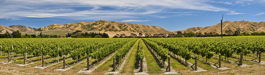 Vineyard In Lower Awatere Valley New Photograph by Colin Monteath