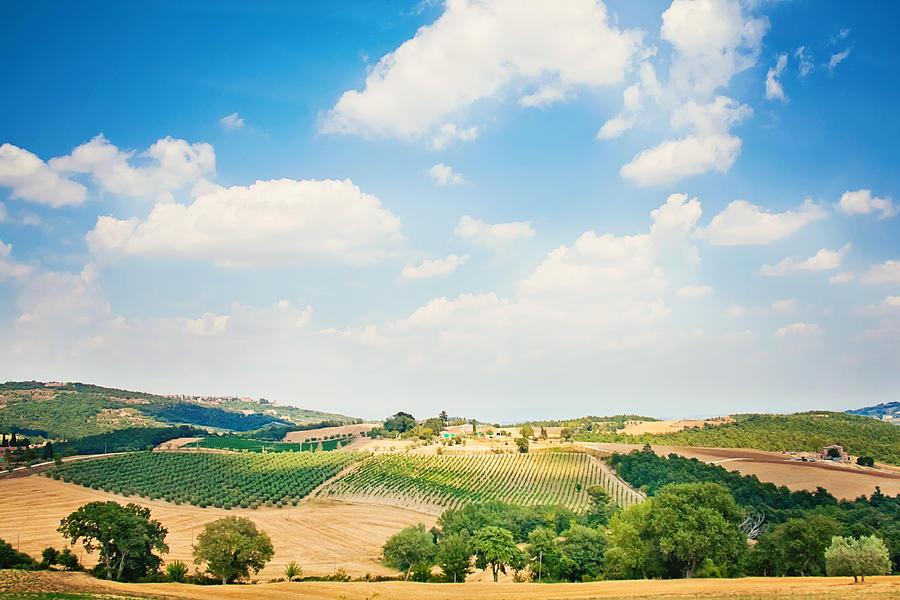 Horizontal Photograph - Vineyard by Just a click