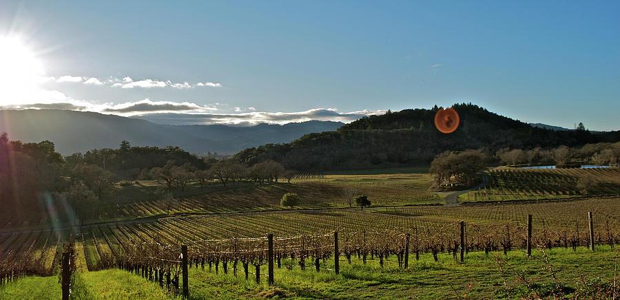 Vineyard Photograph by Lori Leigh