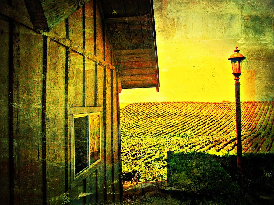 Wine Photograph - Vineyard Reflection by Kevin Moore