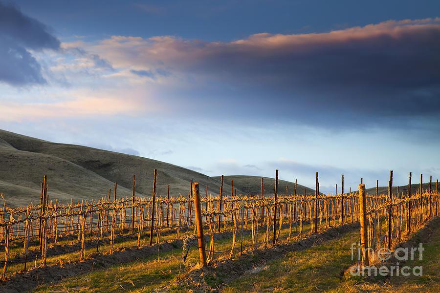 Vineyard Photograph - Vineyard Storm by Mike  Dawson