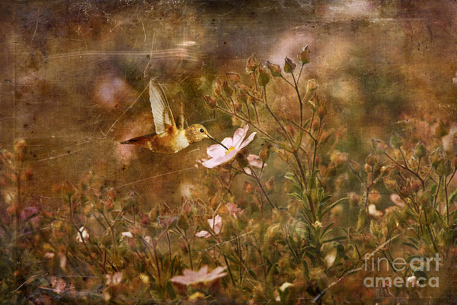 Humming Bird Photograph - Vintage Beauty In Nature  by Susan Gary