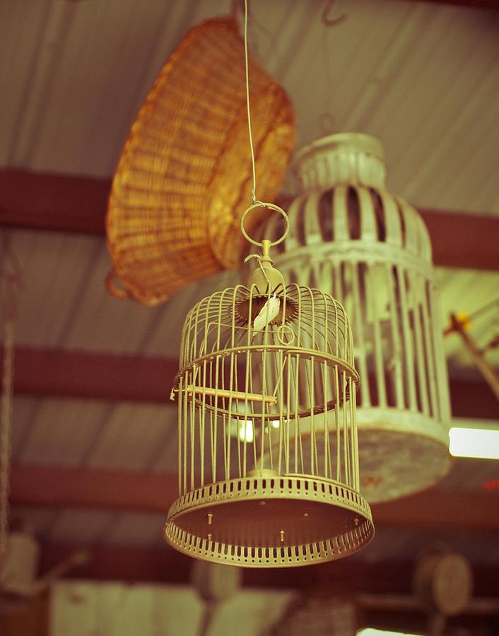 Birdcages Photograph - Vintage Birdcages by Sonja Quintero