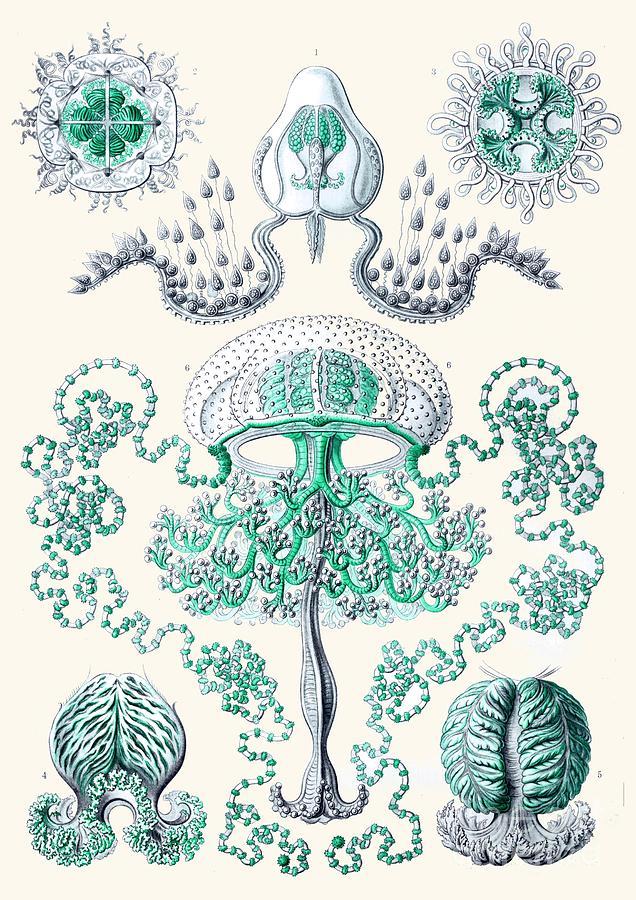 Jellyfish Drawing - Vintage Jellyfish by Patruschka Hetterschij