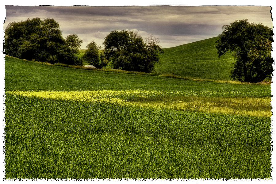 Bearded Wheat Photograph - Vintage Palouse Country by David Patterson