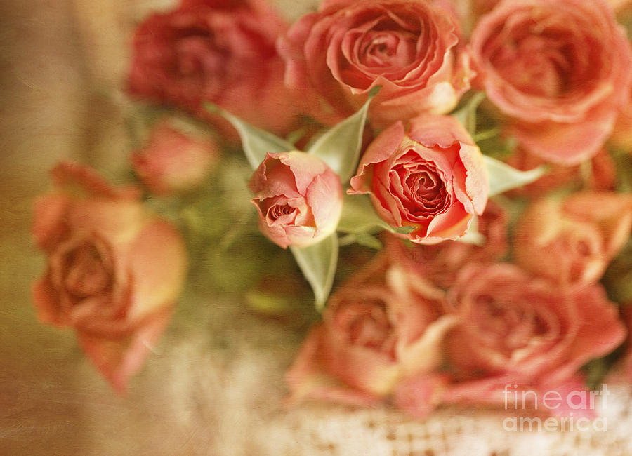 Roses Photograph - Vintage Peaches N Creme Spray Roses by Susan Gary