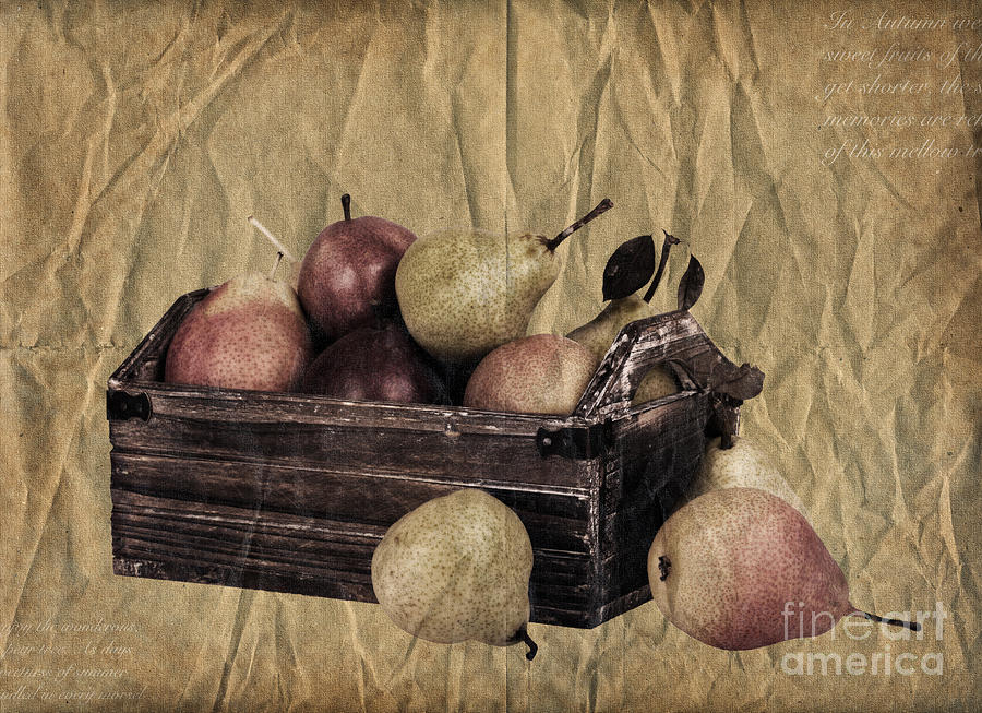 Aged Photograph - Vintage Pears by Jane Rix
