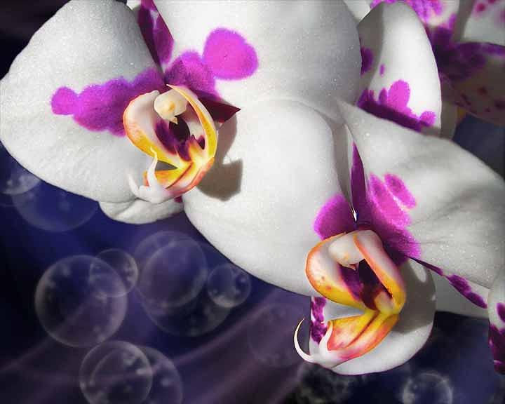 Flowers Digital Art - Violet Spots by Diana Shively