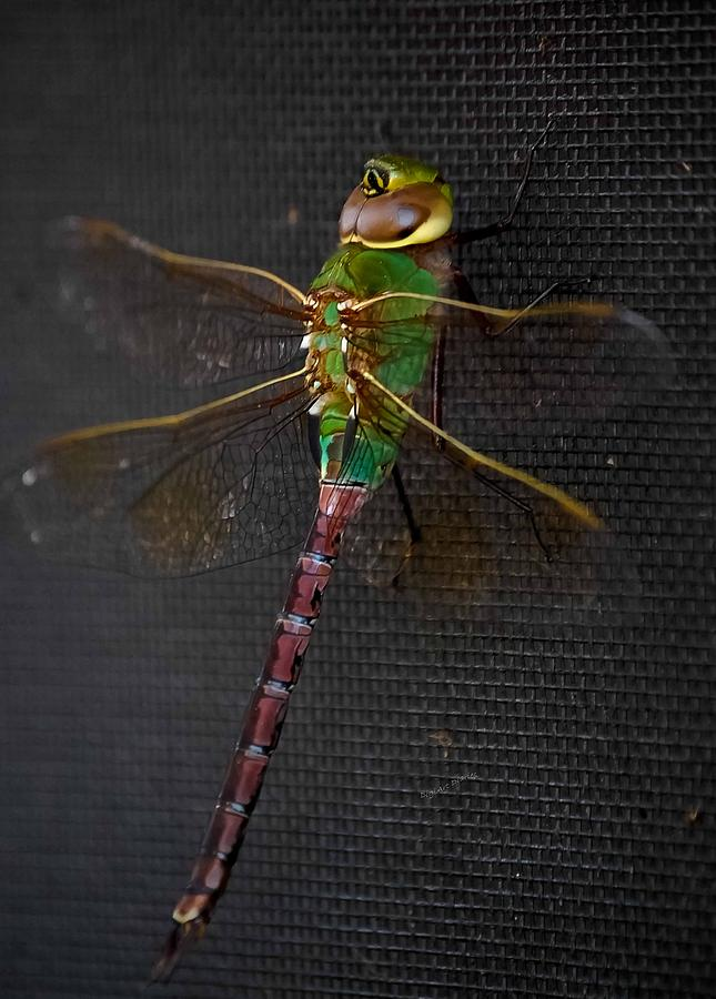 Damselfly Photograph - Violet Tail Damsel by DigiArt Diaries by Vicky B Fuller