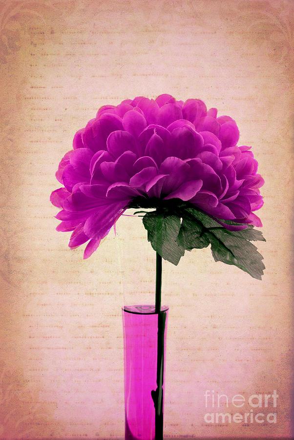 Violet Photograph - Violine by Aimelle