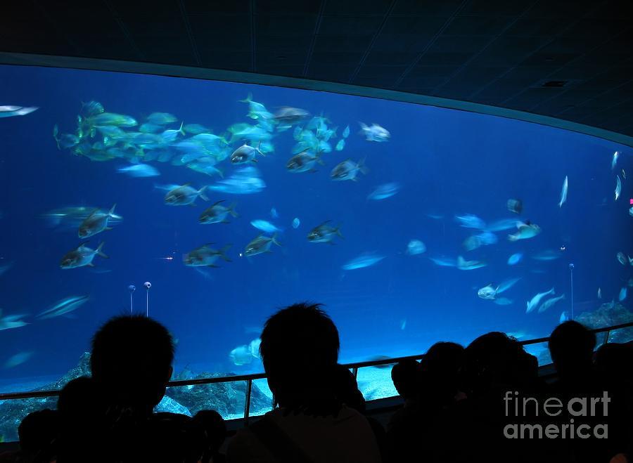 Tank Photograph - Visitors At Ocean Aquarium by Yali Shi
