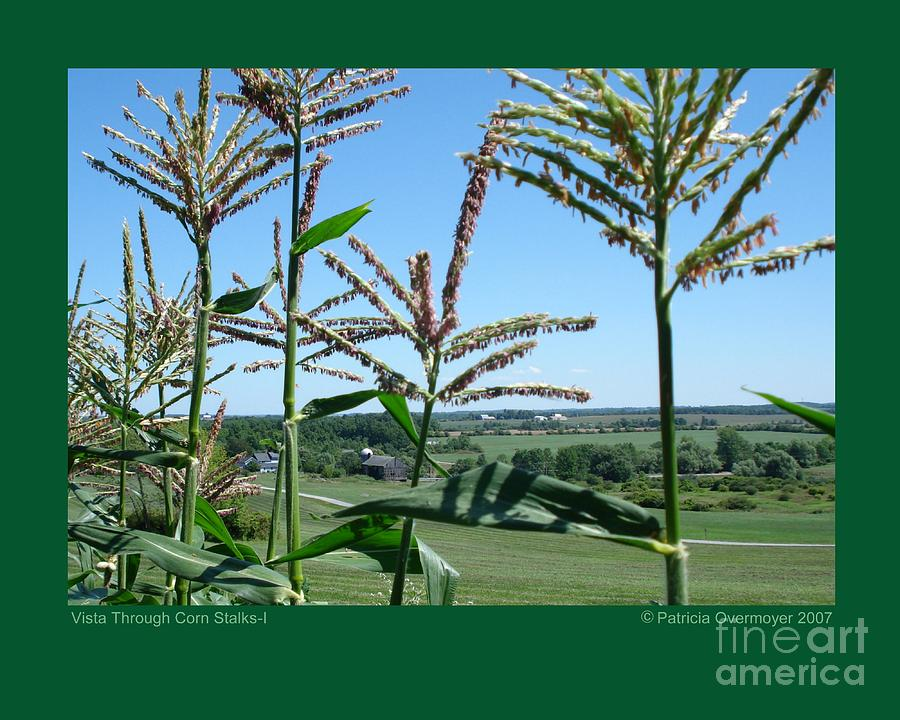 Landscape Photograph - Vista Through Corn Stalks-i by Patricia Overmoyer