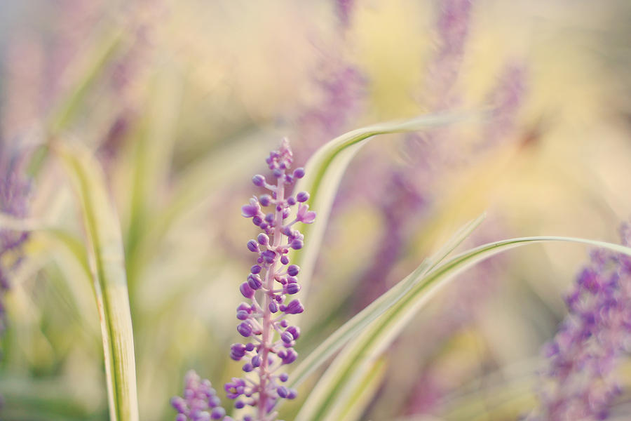 Soft Purple Flower Photography Photograph - Voices Carry by Amy Tyler