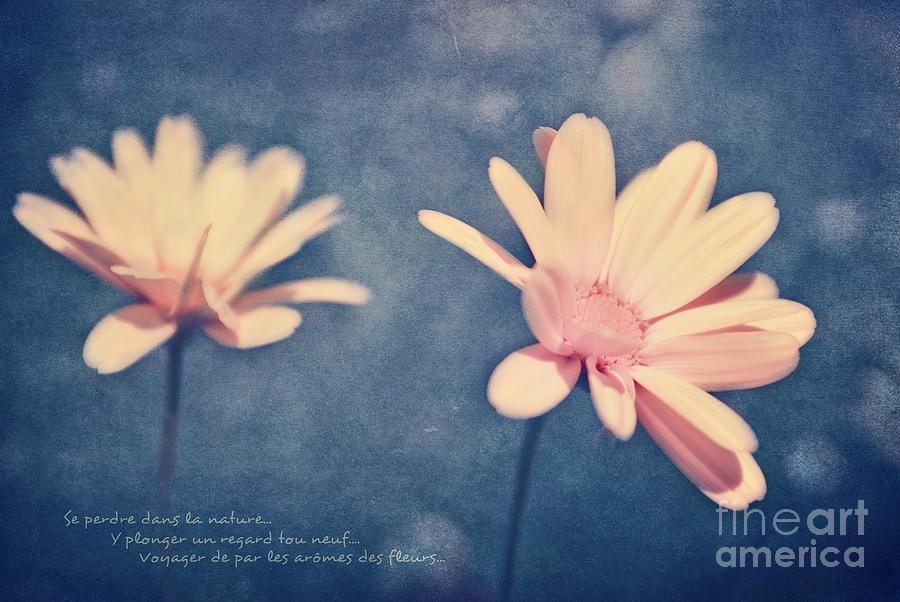 Flowers Photograph - Voyager De Par Les Aromes Des Fleurs by Aimelle