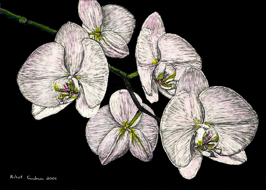 Flowers Painting - Wades Orchids by Robert Goudreau