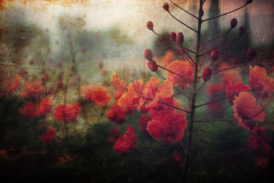 Flowers Photograph - Waiting For Better Days by Laurie Search