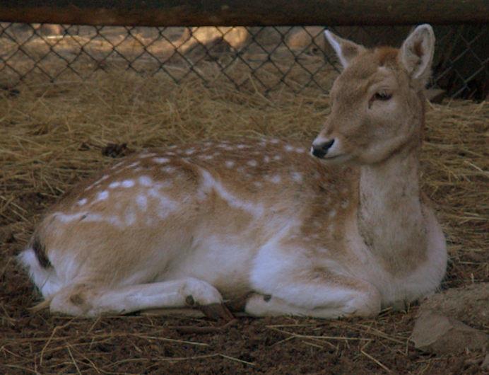 Deer Photograph - Waiting For Breakfast by Bruce Carpenter