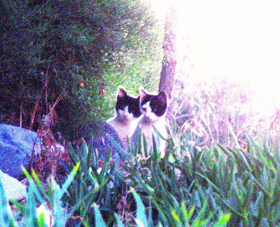Feral Kittens Photograph - Waiting For Mom Cyprus by Anita Dale Livaditis