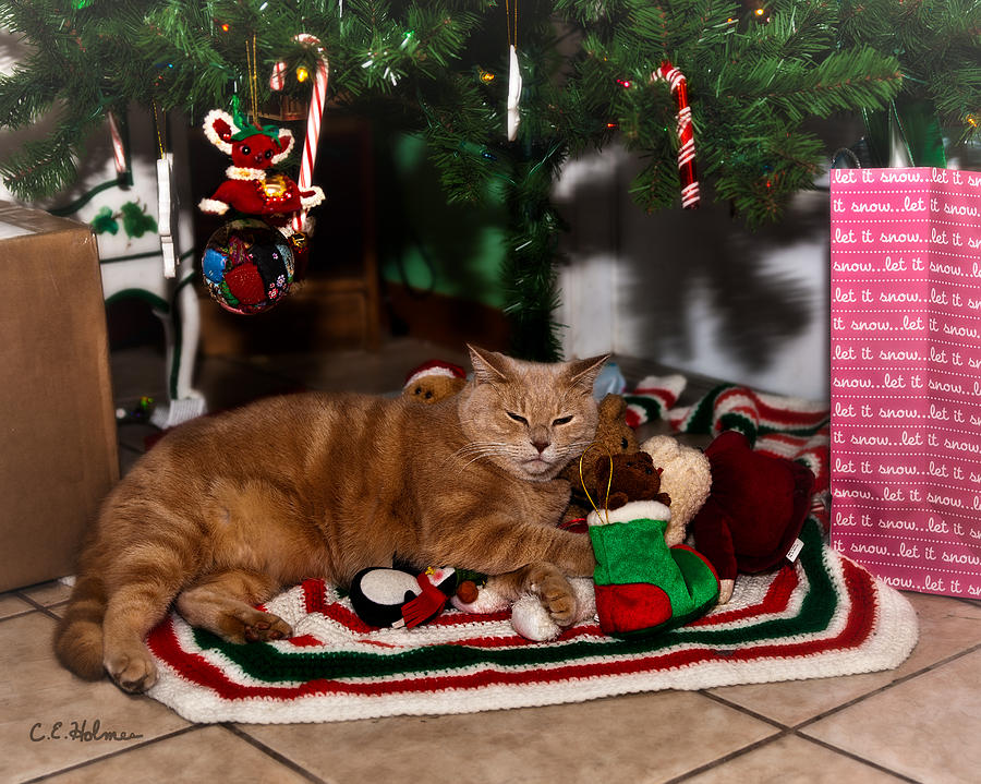 Cat Photograph - Waiting For Santa by Christopher Holmes
