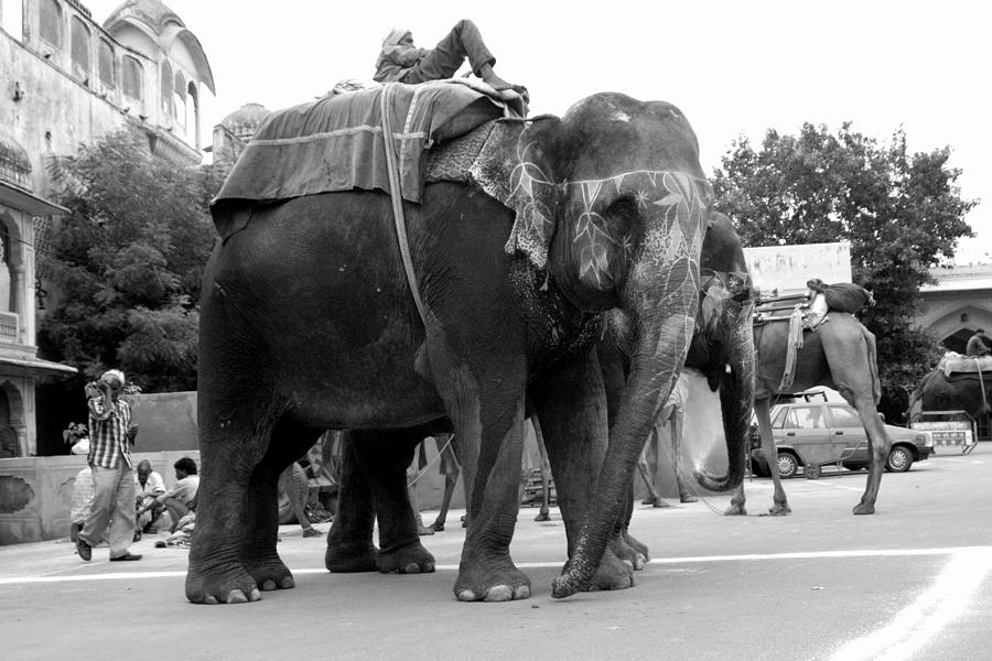 Elephant Photograph - Waiting for their turn by Karan Anand