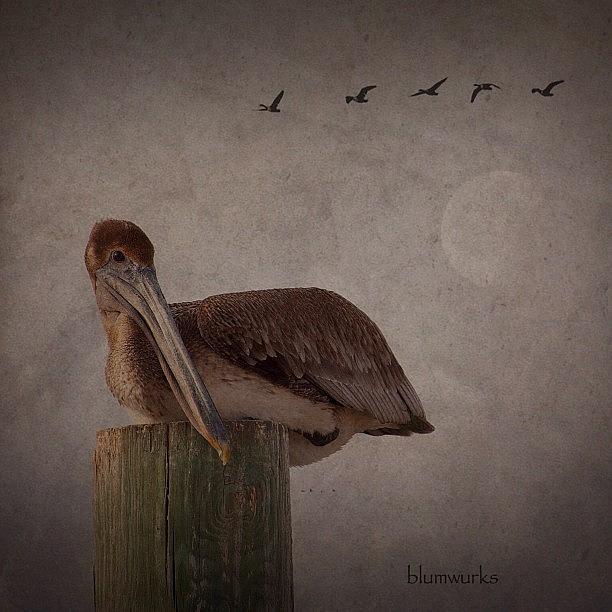 Tbt Photograph - Waiting by Matthew Blum
