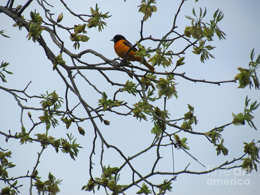 Bird Photograph - Waiting by Randi Shenkman