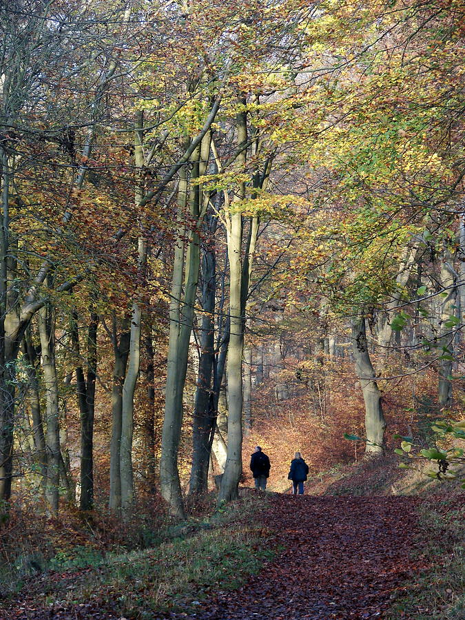 Autumn Photograph - Walk In The Woods by Nicola Butt