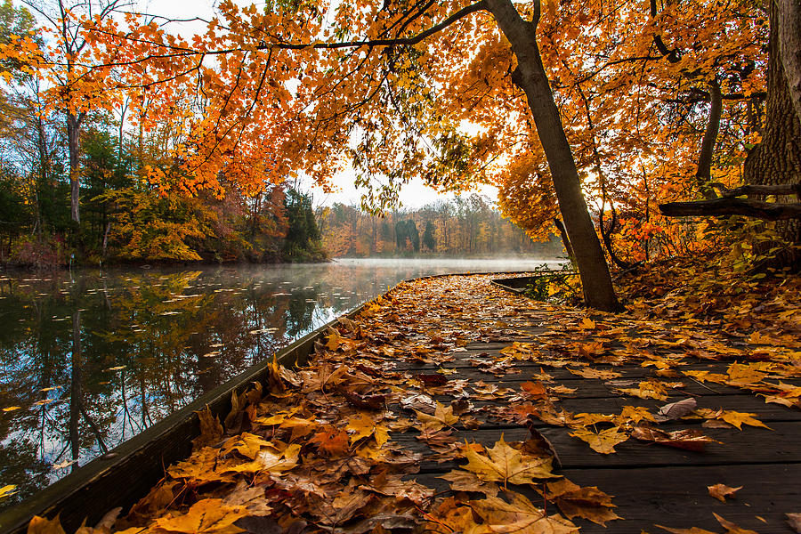 Autumn Photograph - Walk With Me by Keith Allen