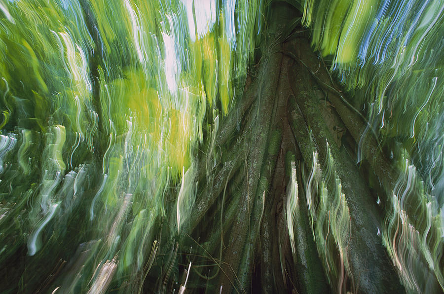 Walking Palm Tree Abstract Photograph by Christian Ziegler