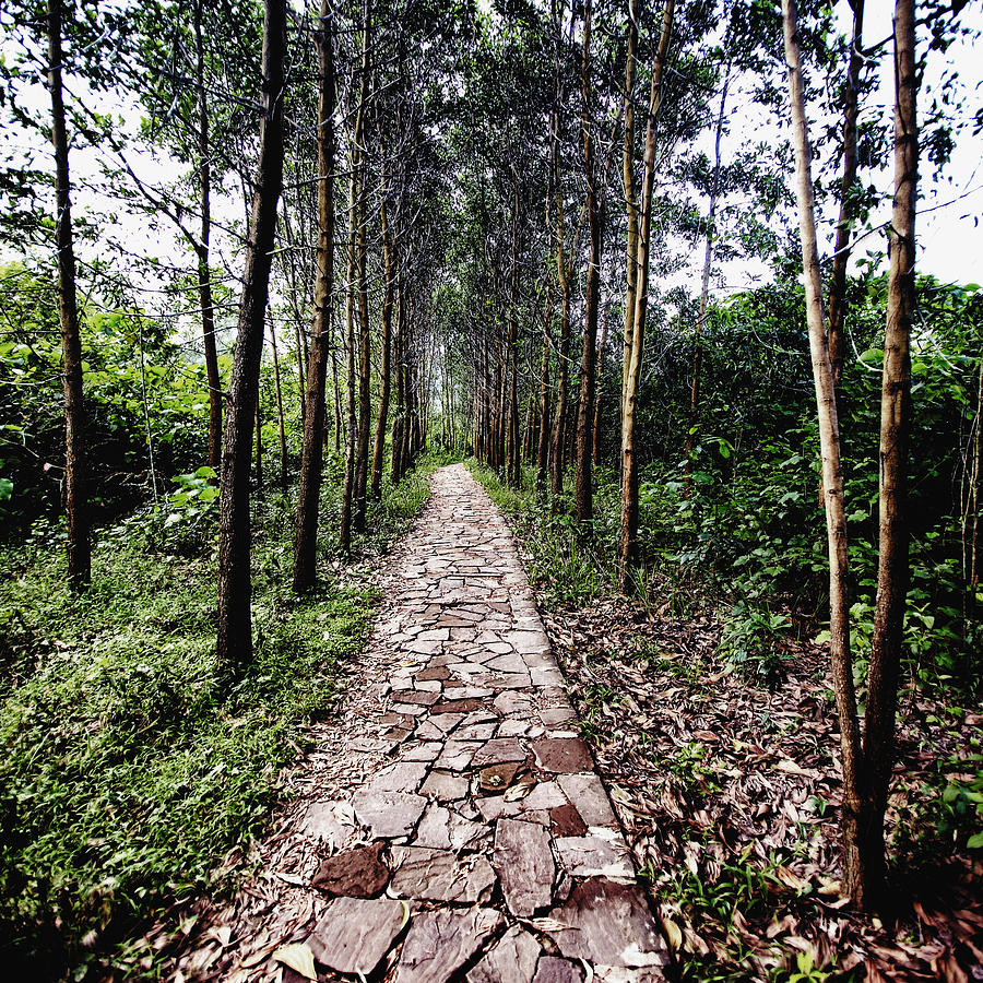 Asia Photograph - Stone Path by Skip Nall