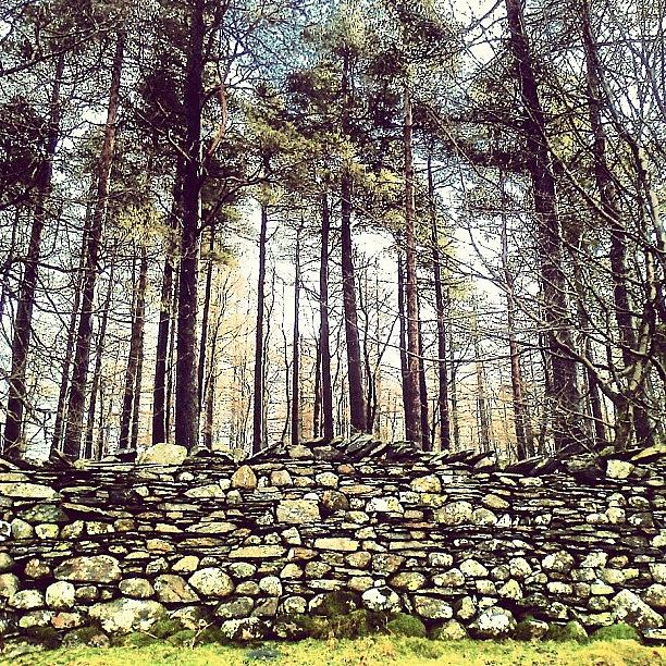 Cumbria Photograph - Wall and Forest in Cumbria by Nic Squirrell