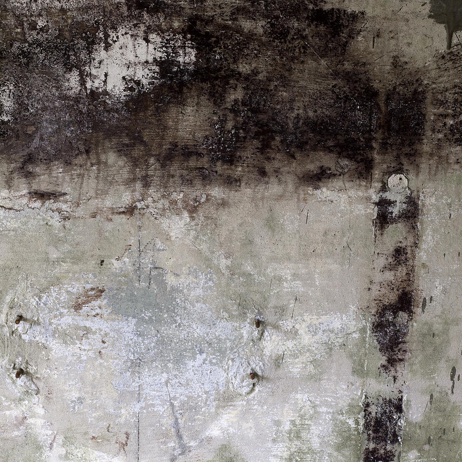 Wall Photograph - Wall Texture Number 8 by Carol Leigh