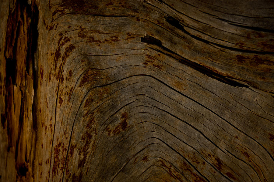Wood Photograph - Washed Out by Nadya Ost