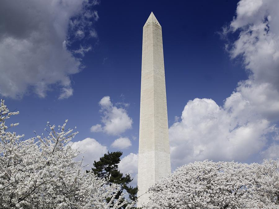 History Photograph - Washington Monument During The Cherry by Everett