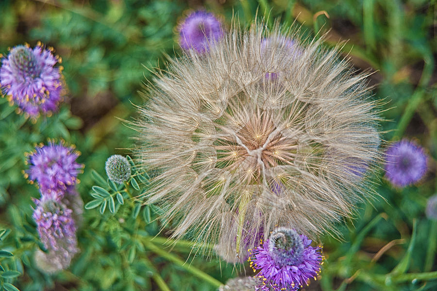 Wildflowers Photograph - Washington Wildflowers by Beverly Hanson