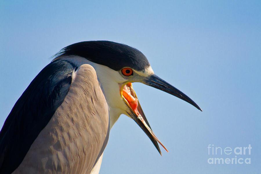 Bird Photograph - Wassup by John Stanisich