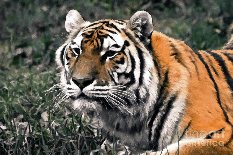 Zoo Photograph - Watchful Bengal Tiger - Brush Stroke by Darcy Michaelchuk