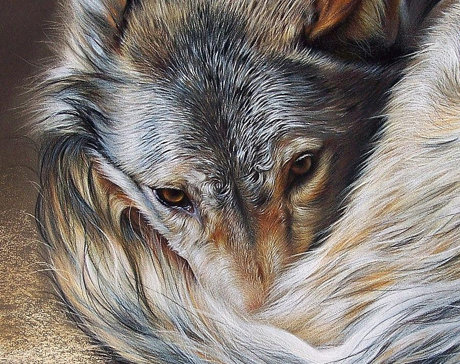 Wolf Drawing - Watchful Rest -close-up Detail by Elena Kolotusha