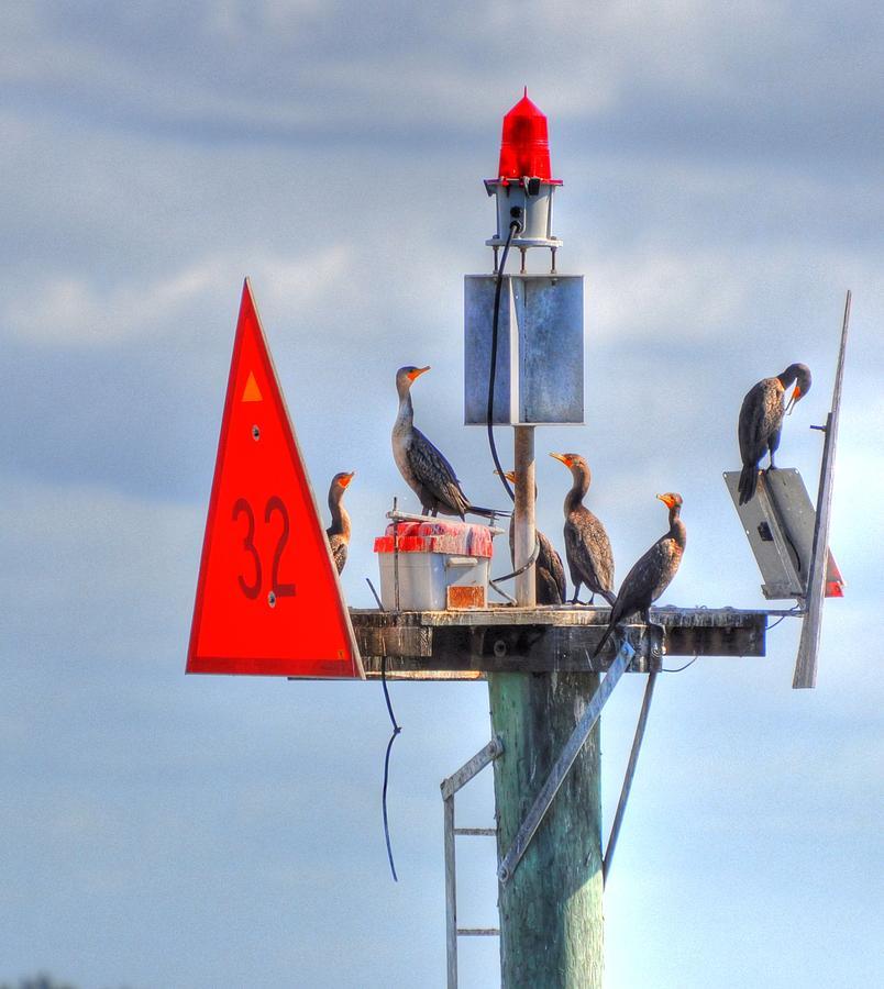 Great Blue Heron Digital Art - Watching All Sides by Barry R Jones Jr