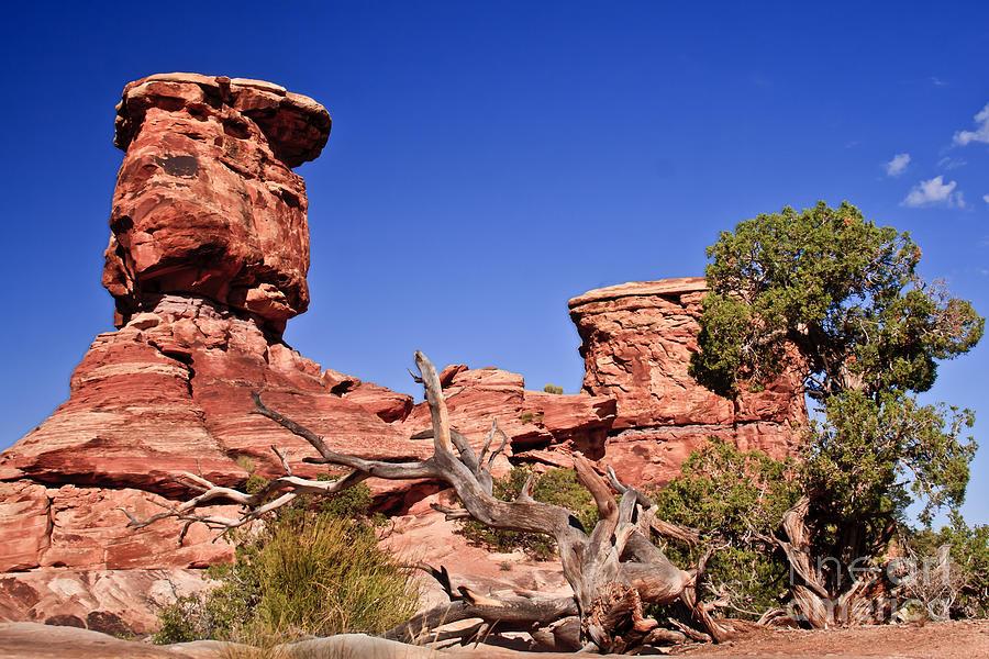 Panoramic Photograph - Watching by Robert Bales