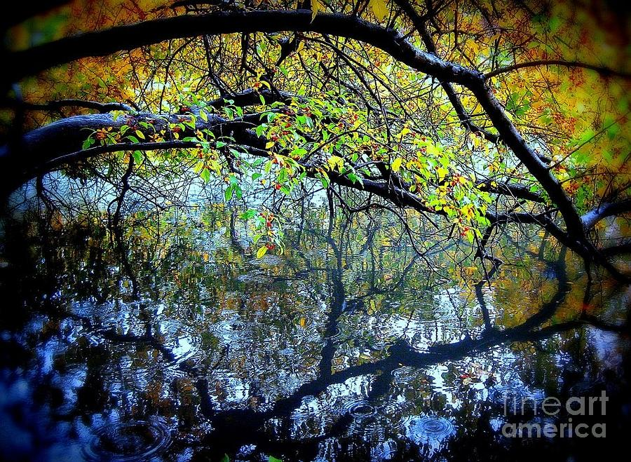 Reflection Photograph - Water Cove by Maria Scarfone